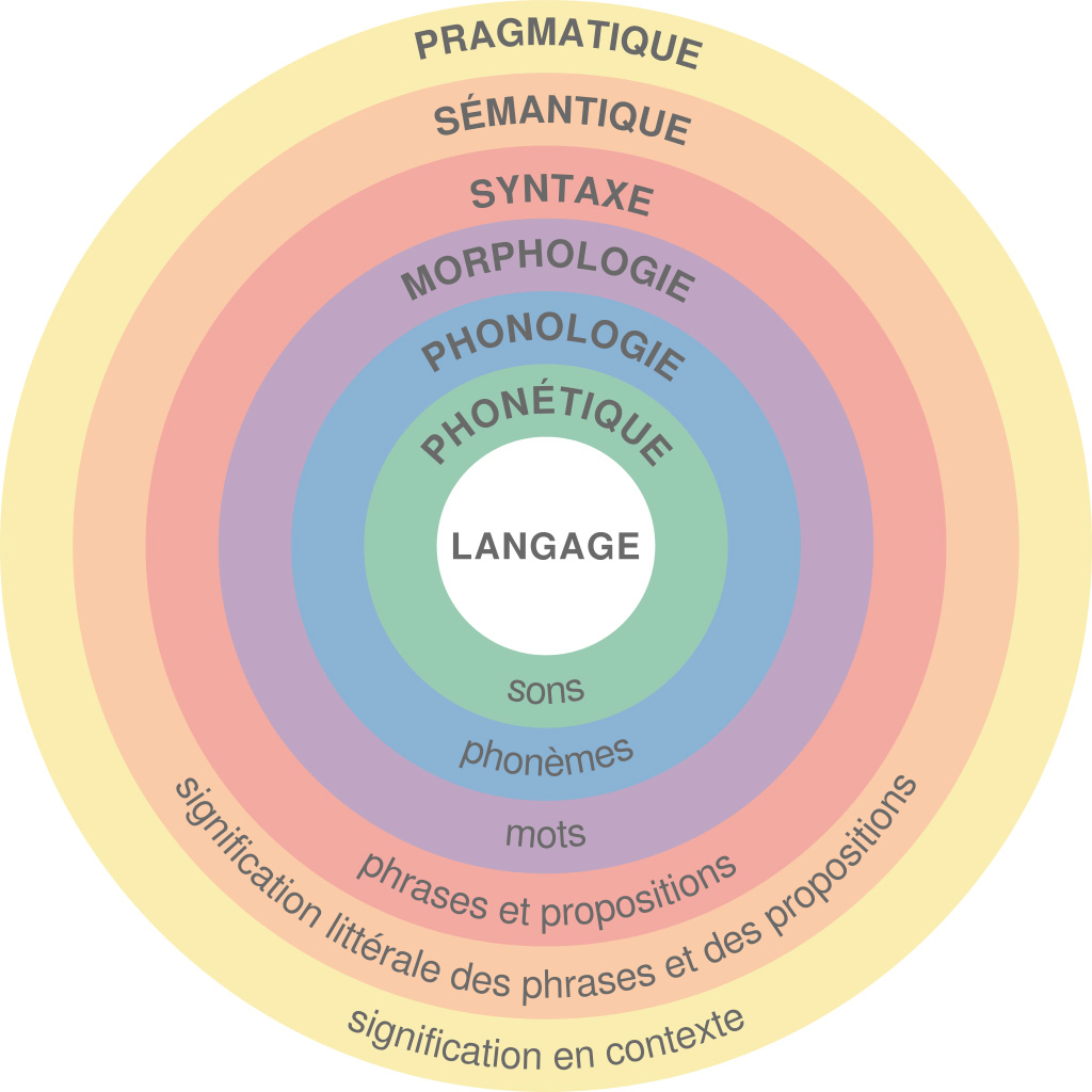 1024px Major levels of linguistic structure fr